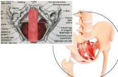 クッションの突起部分が骨盤底筋をダイレクトに刺激。心地よく圧迫し血液の循環を良くします。